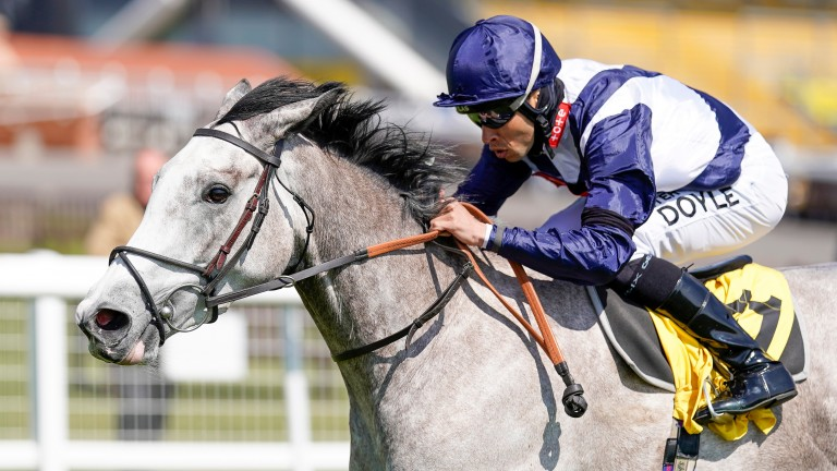 Snow Lantern: won impressively at Newbury but will not run in the Qipco 1,000 Guineas