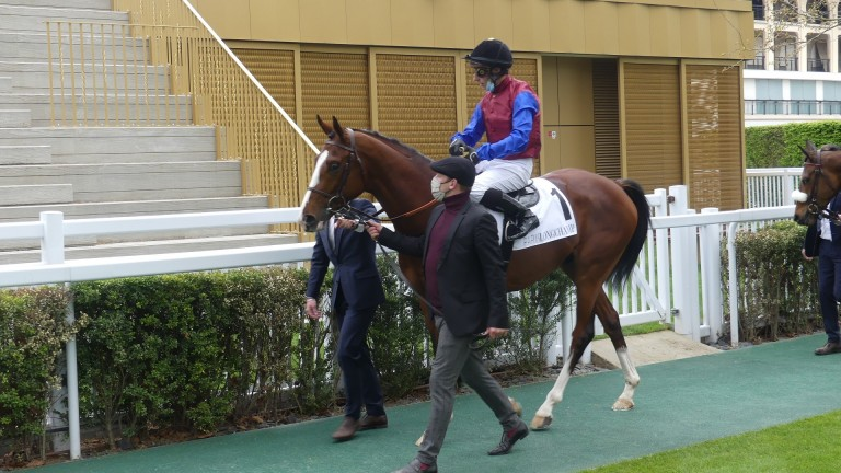 In Swoop: successful at Longchamp on Thursday