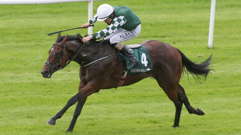 Lucky Vega: last year's Phoenix Stakes winner will stand for a fee of A$22,000