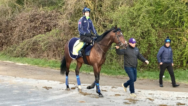 Palace Pier and Robert Havlin on their way to the gallops