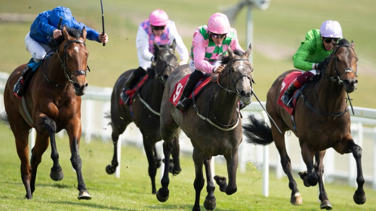 Wirko and William Buick (left) come with a late run in the Blue Riband Trial at Epsom