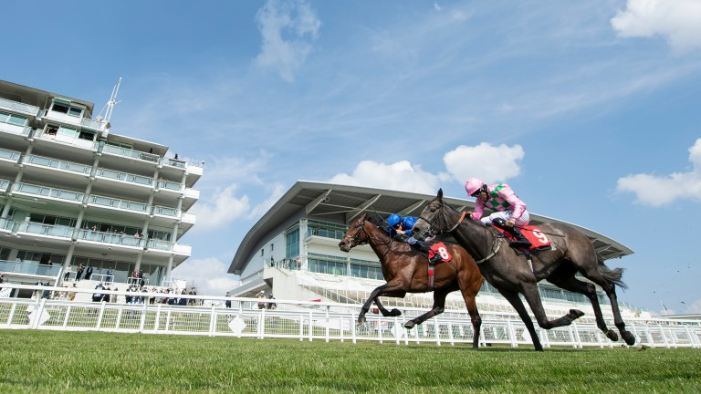 Wirko (far side) and Technique head towards the line in the Blue Riband Trial at Epsom