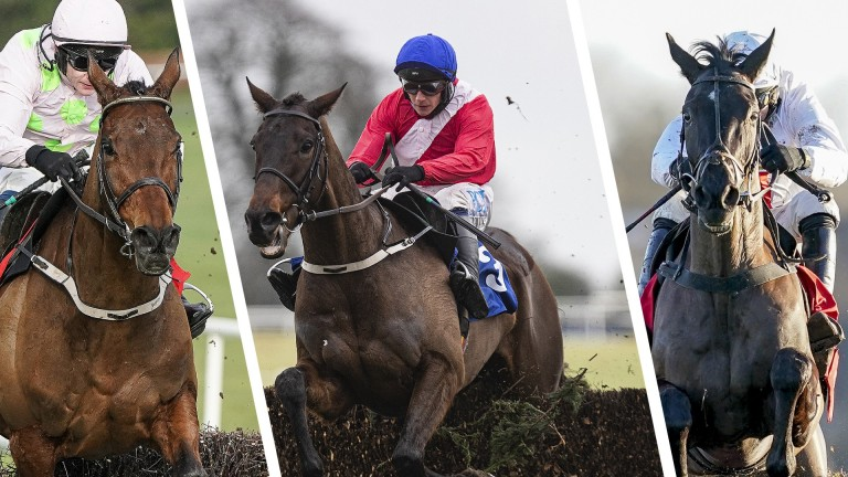 Nube Negra (right): to face off against Chacun Pour Soi (left) and Allaho at Punchestown