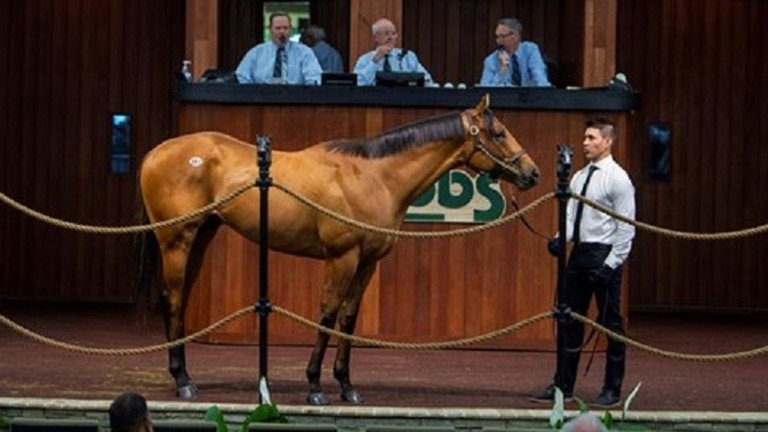 The Quality Road colt who topped the second session at the OBS Spring Sale