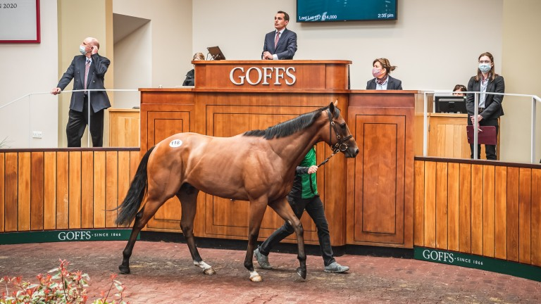 The Twilight Son colt takes his turn in the ring before selling for a joint-top £210,000