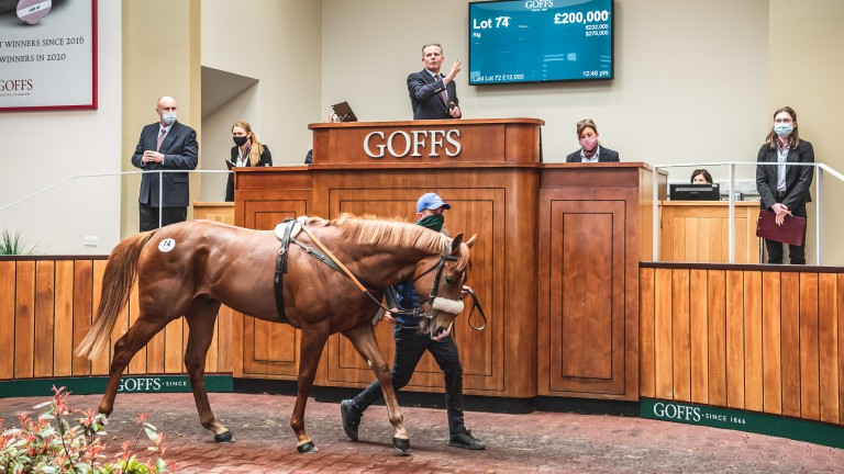 The No Nay Never colt consigned by Mocklershill who went the way of Blandford Bloodstock for £200,000