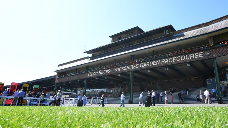 Ripon: only 35 runners for its seven-race card on Saturday