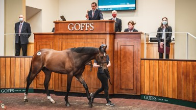 Lot 178: the joint sales-topping Galileo Gold colt brings £210,000 from Ling Bloodstock
