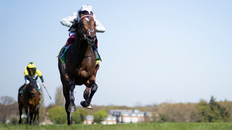 Palace Pier: odds-on favourite for the Queen Anne Stakes