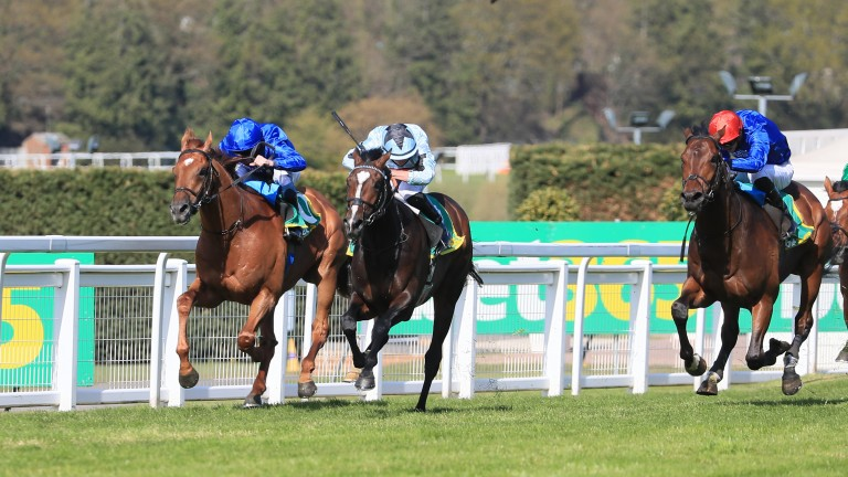 Adayar (right): an eyecatching second in Sandown's Classic Trial