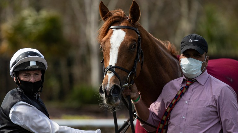 Kyprios: one of two runners in the Lingfield Derby Trial for Aidan O'Brien