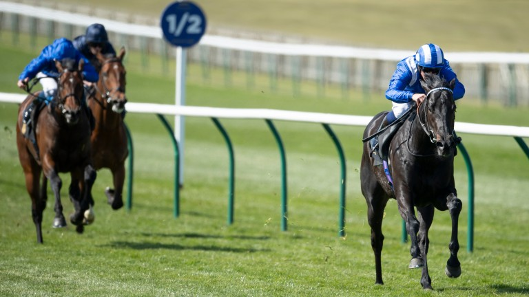 Mutasaabeq: was as short as 7-1 for the Qipco 2,000 Guineas at Newmarket on Sunday