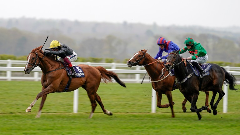 Stradivarius: goes for a record-equalling fourth Gold Cup next week