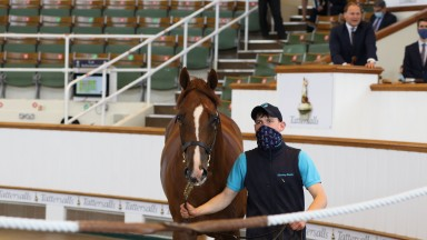 Lot 113: the Postponed colt from Glending Stables is knocked down to Blandford Bloodstockat 135,000gns