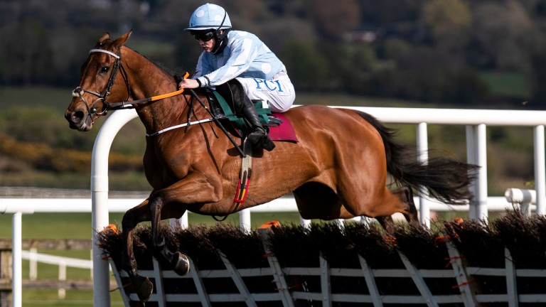 Honeysuckle: does she need to jump a fence to become a National Hunt legend?