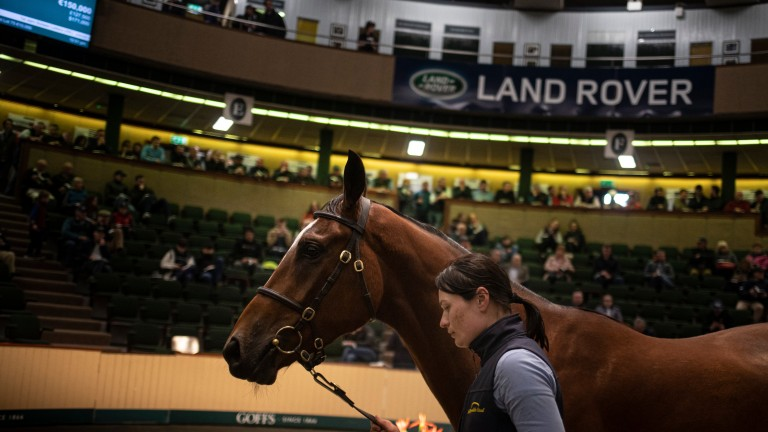 The Milan gelding out of Back To Loughadera sells to Tom Malone for €150,000 at the 2019 Goffs Land Rover Sale