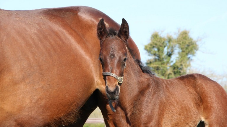 Piercetown Stud's Dandy Man colt out of Unusually Hot