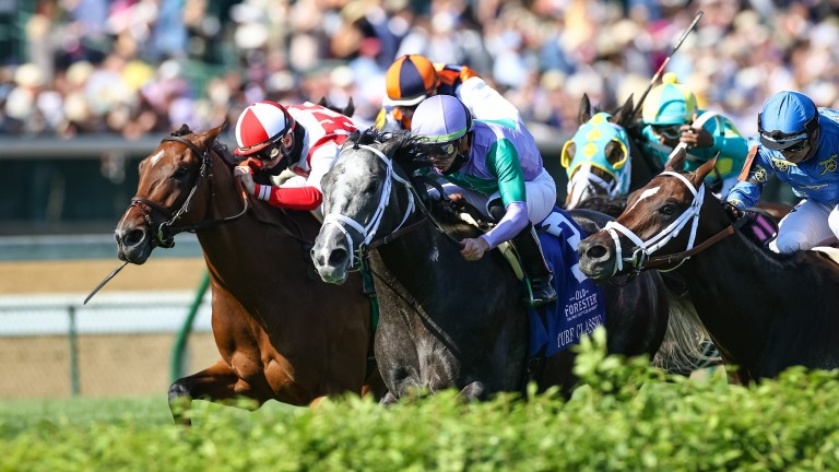 Domestic Spending (left): the son of Kingman dead heats with Colonel Liam in the Old Forester Bourbon Turf Classic