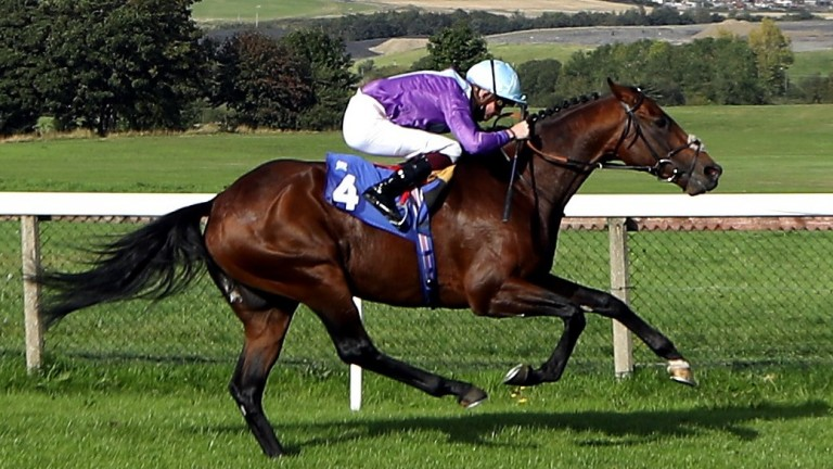 Opera Gift: announced himself as a progressive stayer with victory in the City Bowl