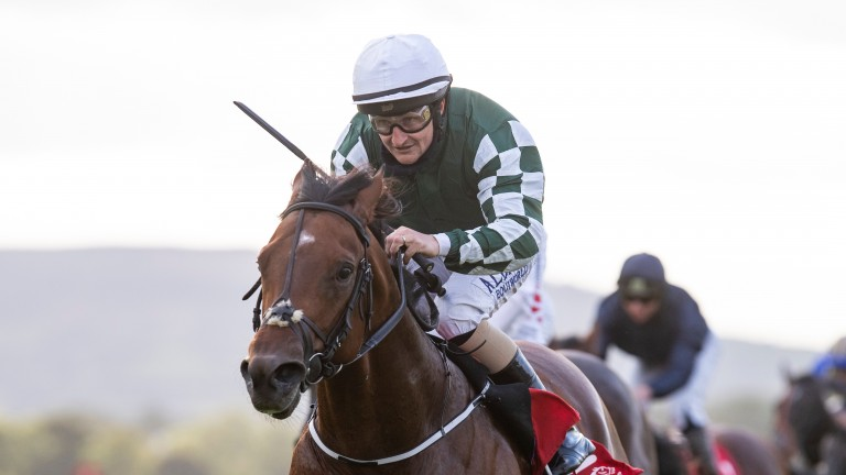 'Leading player' Ace Aussie will thrive on going for the Minstrel Stakes