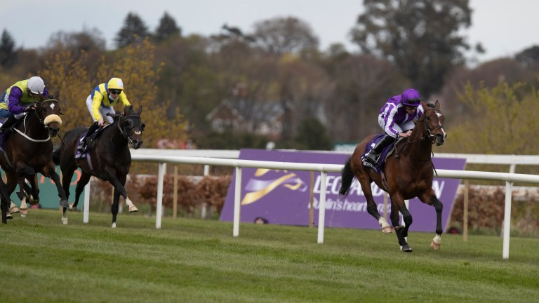Sir Lamorak: likely to be rerouted to the King Edward VII Stakes at Royal Ascot