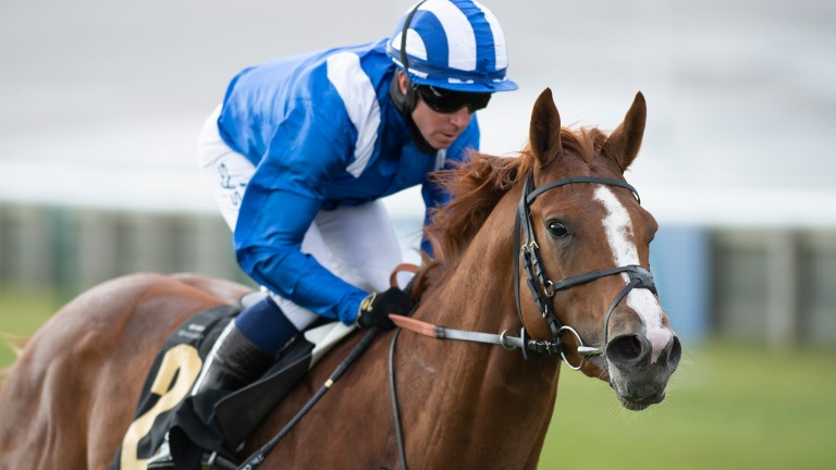 Mohaafeth: a bloodless winner on each of his three starts this year