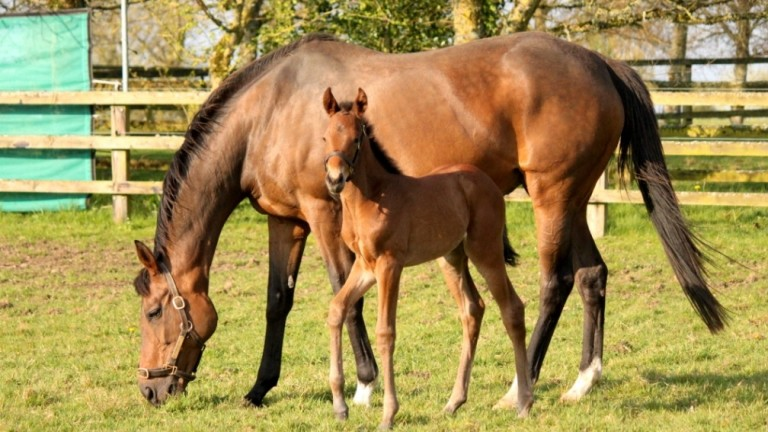 Watership Down Stud's Kingman filly out of the brilliant Dar Re Mi