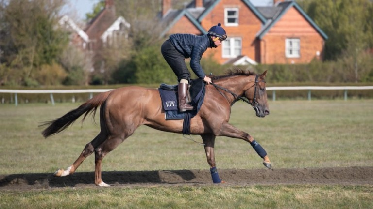 Hint Of Stars: will make his first start for Highclere at York