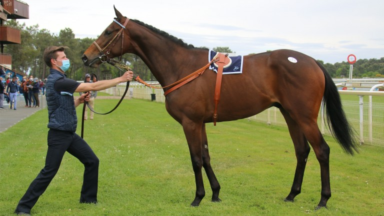 The top lot at the Osarus Breeze-Up sale was a son of Wootton Bassett, sold to Nicolas Bertran de Balanda for ?200,000