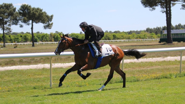 A colt by freshman sire Recorder cantering at La Teste before fetching ?42,000 at the Osarus Breeze-Up sale