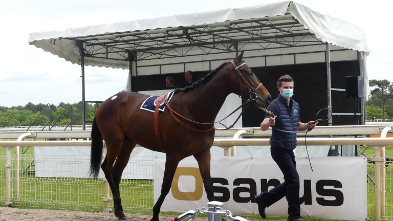 A colt by Wootton Bassett and consigned by Philip Prevost-Baratte, lot 45A made a top price of ?200,000 at the Osarus Breeze-Up sale