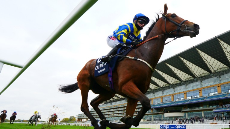 Trueshan: makes his first start of the season at Chester