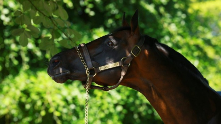 Camelot: sire of seven Group 1 winners