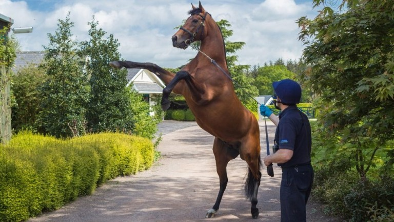 Zoffany: sire of Mother Earth