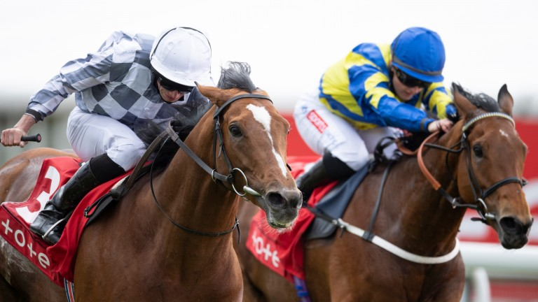 Trueshan (right) could run a big race in the Gold Cup if Ascot gets any rain