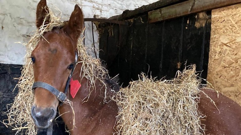 Tara Stud's Profitable filly tries out a new hair style
