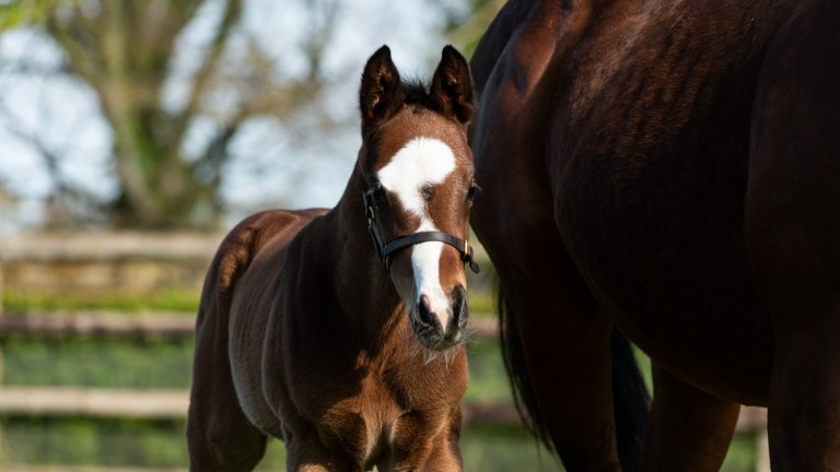 Coolmore's full-brother to European champions Clemmie and Churchill