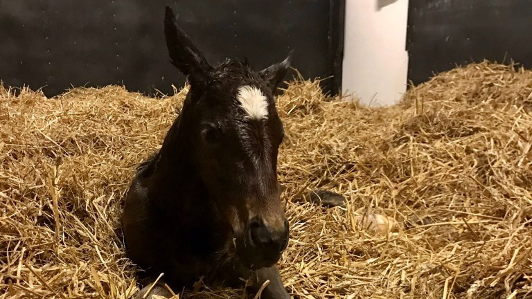 Trinity Park Stud's Cracksman colt shelters from the unseasonable May weather