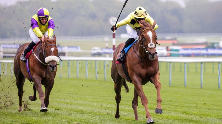 Cape Byron pulls clear of Brando in the 6f conditions stakes
