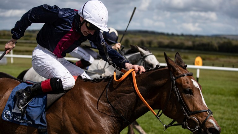 """Insinuendo: ground should be """"beautiful"""" for Willie McCreery's runner"""