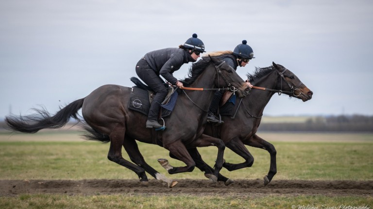 Ellie Whitaker and Tegan Clark on the gallops