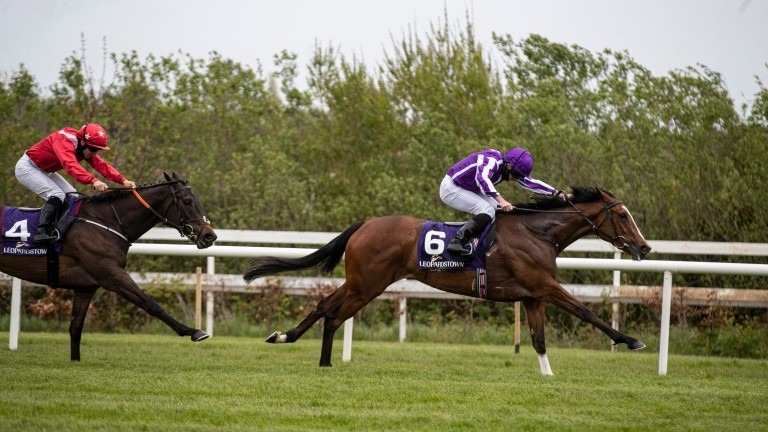 Flirting Bridge gives chase to Joan Of Arc at Leopardstown last month