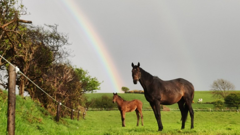 Summit Bloodstock's Crystal Ocean filly and her dam, Mythical City