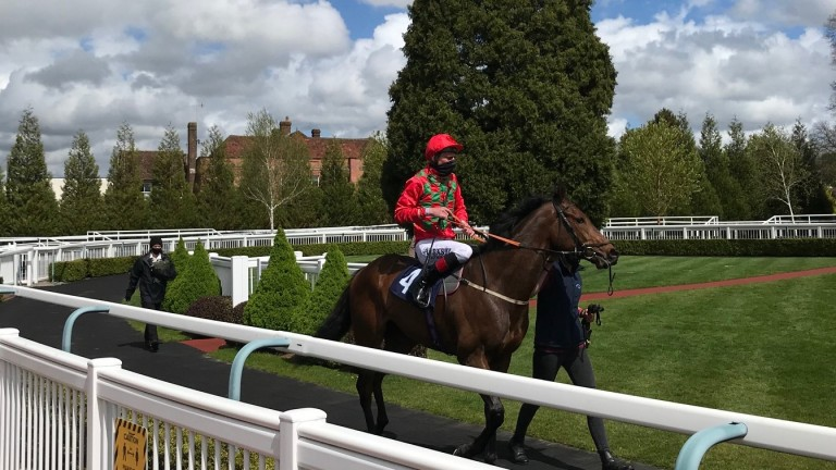 Vitesse Du Son and Adam Kirby after their win in the 7f handicap at Lingfield