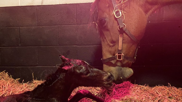Byerley Stud's Land Force filly out of Sheer Indulgence