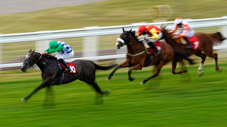 Blue Cup (left): won at Sandown last season and was unlucky at Epsom in April