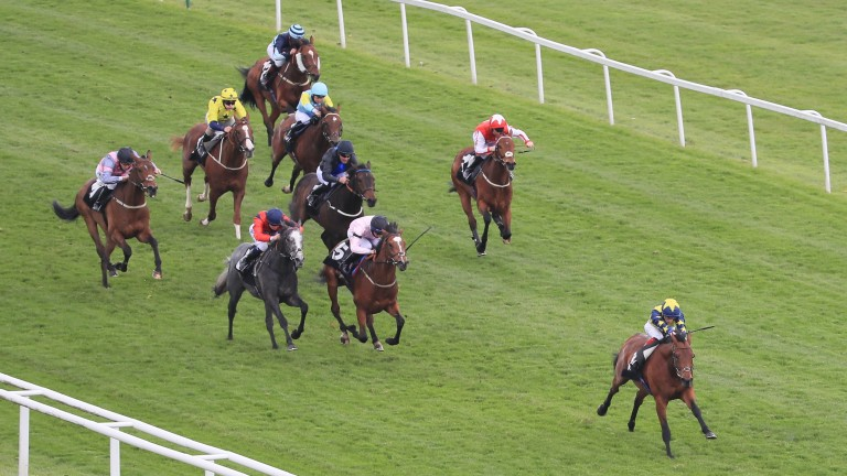 Surrey Gold spreadeagles the field