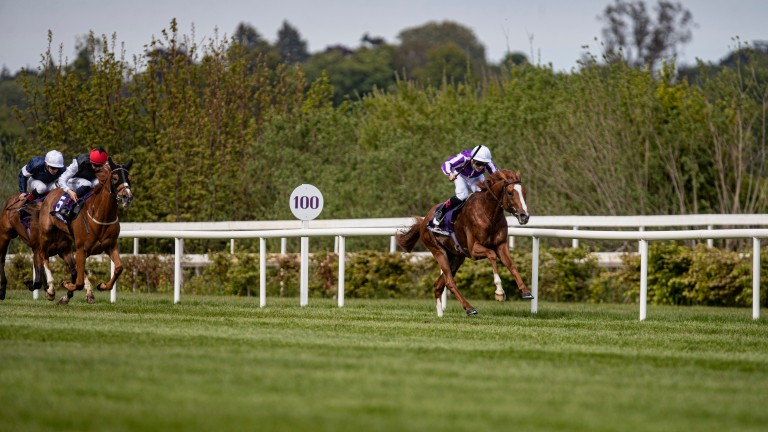 Emperor Of The Sun: earned a 20-1 quote for the Ascot Gold Cup after his Saval Beg win