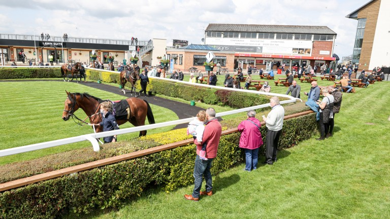 Glued to the action: racegoers get a glimpse of the runners in the paddock at Carlisle