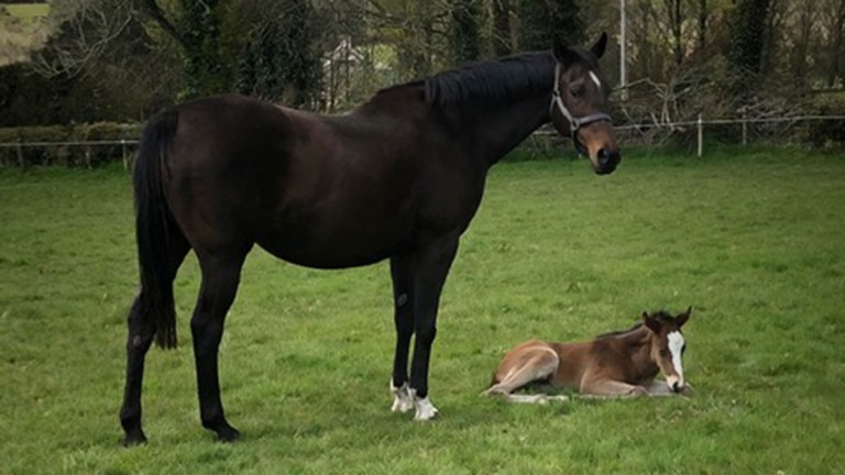 Andrew Wakefield's Imperial Monarch colt out of Regal Maya at the Beeches Stud